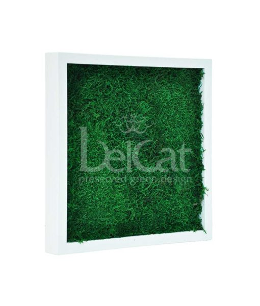 flatmoss, preserved flat moss frame, preserved plant picture, stabilized plants, green verticals