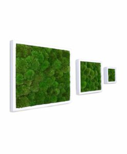 polemoss, preserved pole moss frame, preserved plant picture, stabilized plants, green verticals