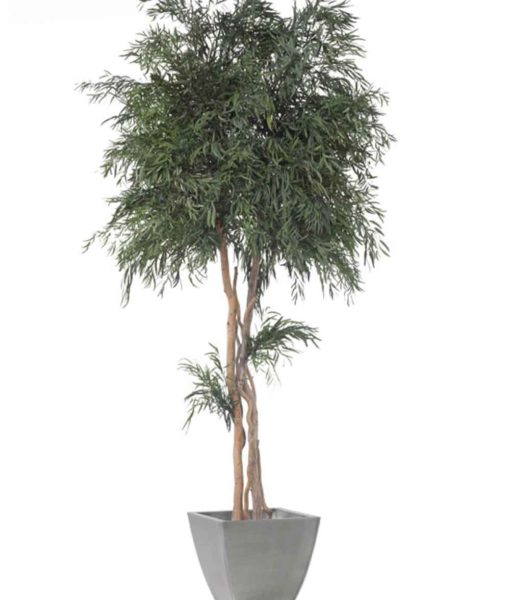 Eucalyptus Nicoly, crown tree nicoly, preserved tree, stabilized plants, green verticals