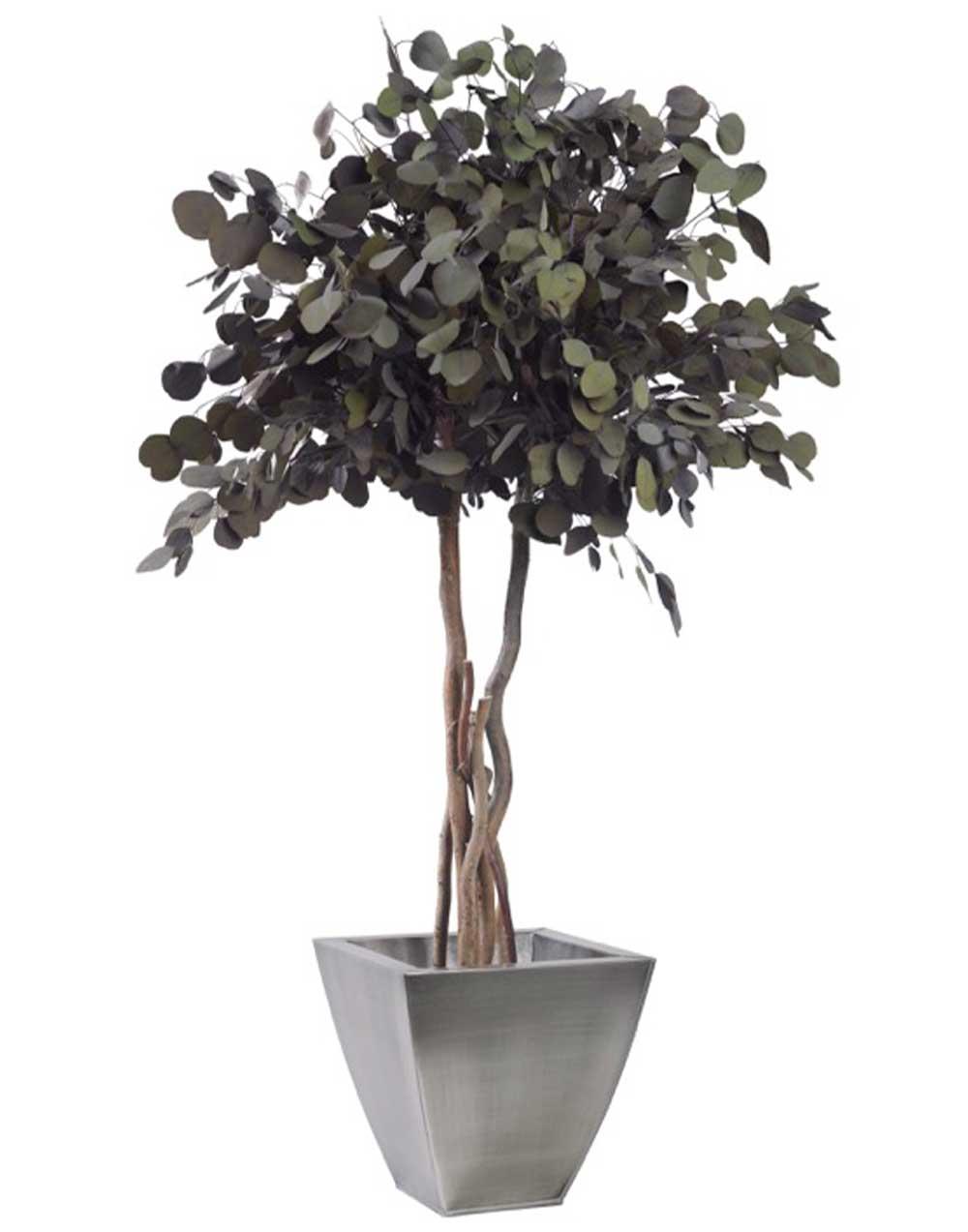 Stabilized plant crown