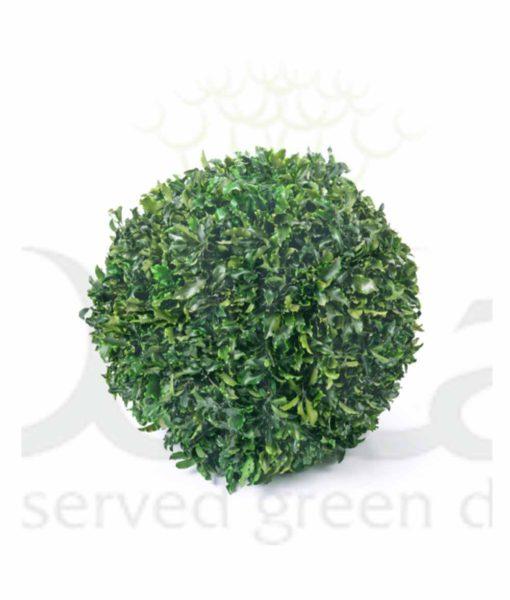 Tenuifolium, preserved deco sphere, tenuifolium ball, stabilized plants, preserved foliage