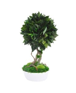 bonsai tree, Bonsai Hedera Helix, preserved tree, stabilized plants, preserved foliage