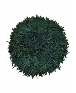Eucalyptus, preserved deco sphere, Nicholy nicholii ball, stabilized plants, preserved foliage