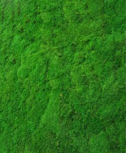 flatmoss wall, preserved flat moss wall, preserved plant wall, stabilized plants, green verticals