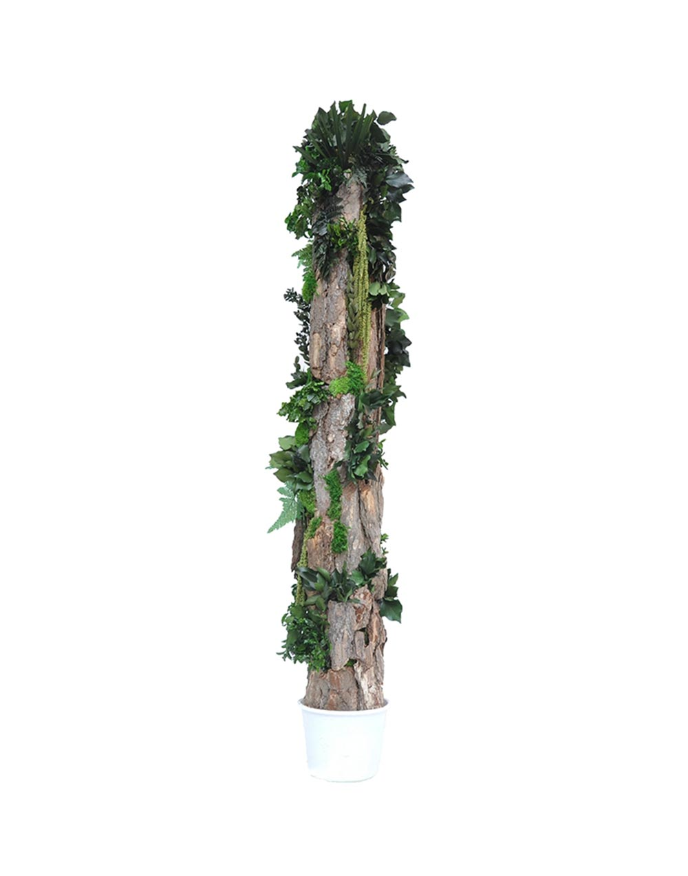 Belcat Design Totem Forest Kontor 202