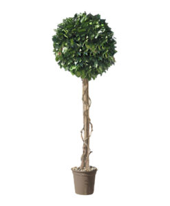 Hedera, preserved hedera ball, preserved topiary, stabilized plants, green verticals