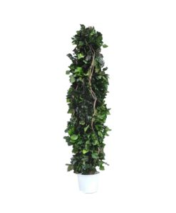 Hedera Totem, preserved Decor Totem, preserved trees, stabilized plants, green verticals