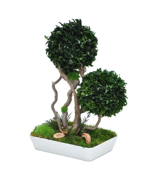 bonsai tree, Bonsai Tenuifolium, preserved tree, stabilized plants, preserved foliage