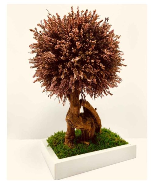 bonsai tree, Erica bonsai, preserved tree, stabilized plants, preserved foliage