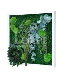 cinerea, preserved jungle frame, preserved plant picture, stabilized plants, green verticals