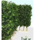 hedge01_web