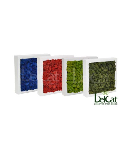 Lichen, preserved reindeer moss frame, preserved plant picture, stabilized plants, green verticals