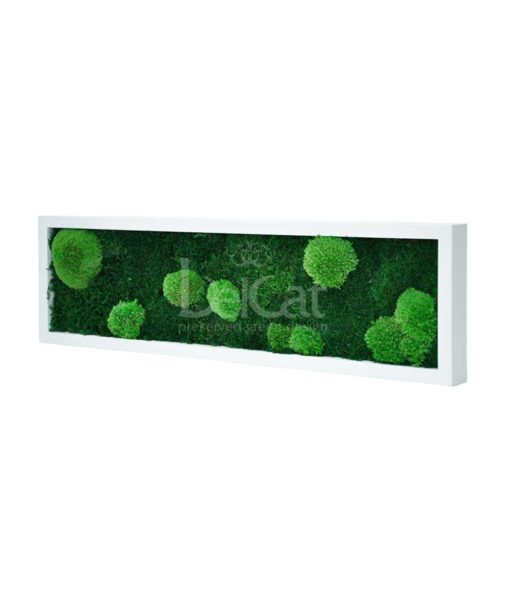 flat & pole moss, preserved island moss frame, preserved plant picture, stabilized plants, green verticals