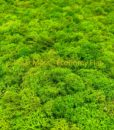 polarmoss_ecoflat