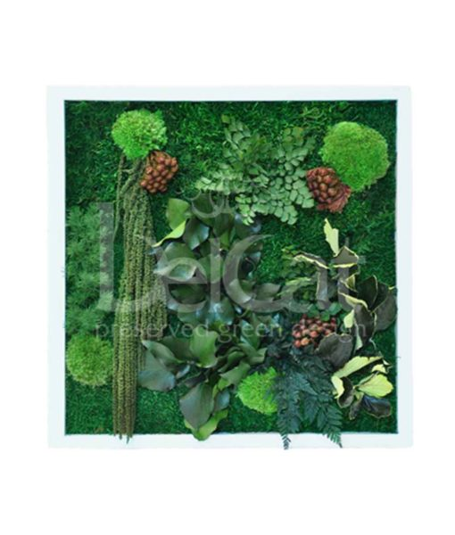 ruby, preserved jungle frame, preserved plant picture, stabilized plants, green verticals