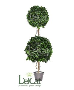 Tenuifolium, preserved tenuifolium ball, preserved topiary, stabilized plants, green verticals