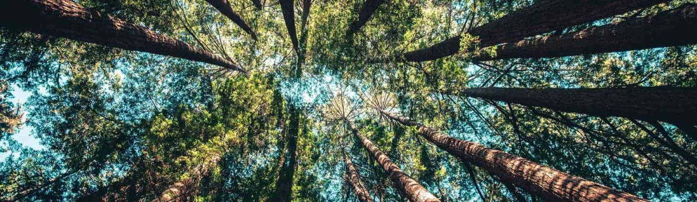 Spending just twenty minutes in a place that makes you feel in contact with nature can significantly lower your stress levels, say scientists who recommend that 'nature-pills' can have a measurable effect on our well-being.