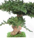 kontor202_preserved_bonsai_juniperus_3_web