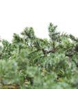 kontor202_preserved_bonsai_juniperus_4_web