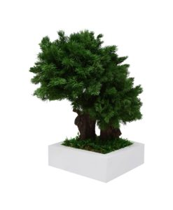 bonsai ming, ming bonsai, preserved tree, stabilized plants, preserved foliage