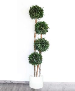 Eucalyptus Nicoly, preserved nicholii ball, stabilized plants, green verticals