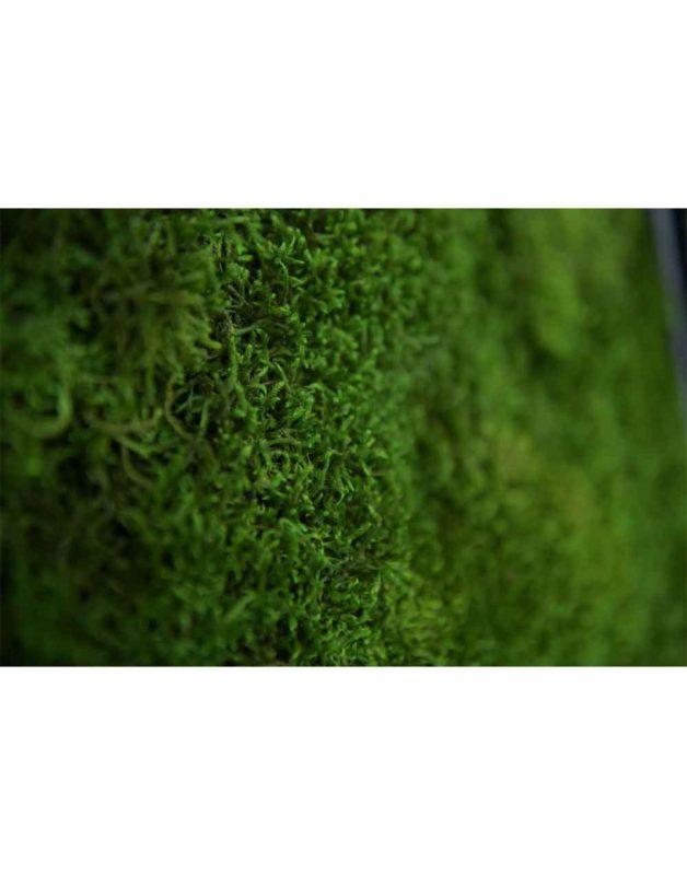 Long Moss 61