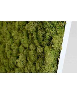 biomontage, biophilic-design, diy-moss-wall, nextgen, wall-art