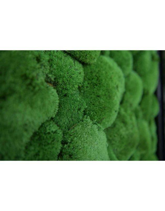 Pole Moss 61