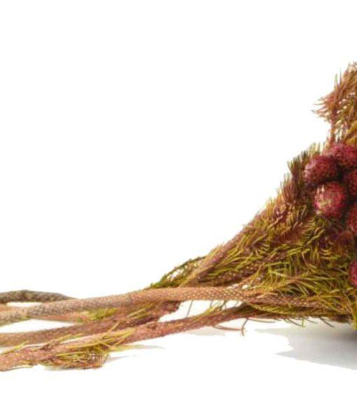 chloe flowerbox, DIY florist, preserved brunia albiflora, preserved flowers