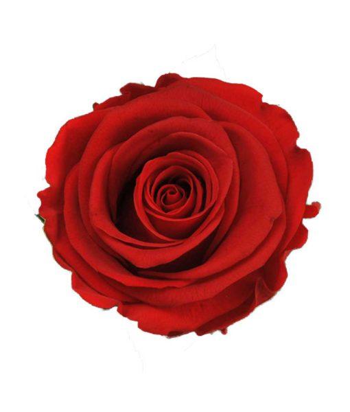preserved-roses, infinity-roses, chloe-flowerbox, preserved-flowers, long-lasting-roses