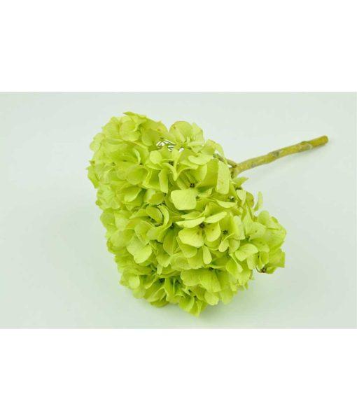 chloe flowerbox, DIY florist, preserved hydrangeas, preserved flowers