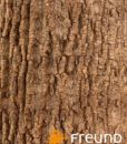 Poplar_bark_02_web
