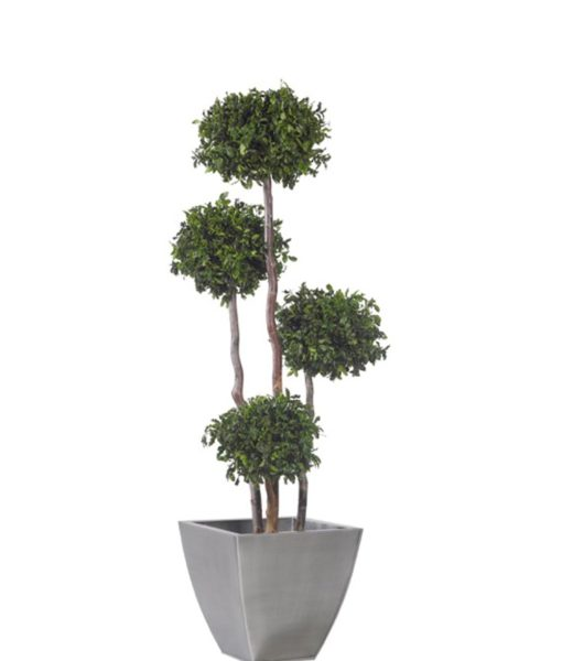 pittosporum tenuifolium topiary, 4 sphere topiary tree, preserved tree, stabilized plants, green verticals