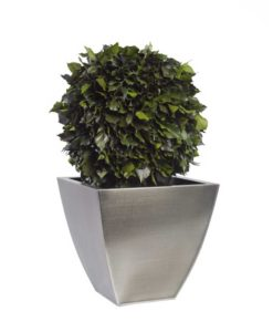 hedera topiary, simple topiary tree, preserved tree, stabilized plants, green verticals