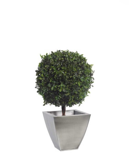 pittosporum tenuifolium topiary, simple topiary tree, preserved tree, stabilized plants, green verticals