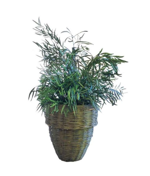 Eucalyptus nicoly, preserved plants, stabilized plants, green verticals