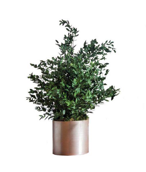 Eucalyptus Parvifolia, preserved plants, stabilized plants, green verticals