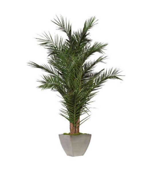 preserved phoenix palm, preserved palm tree preserved plants, stabilized plants, green verticals
