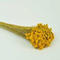 Botao Yellow
