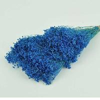 Broom Blue