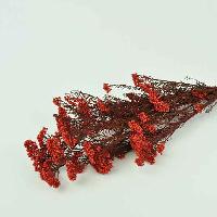 Diosmi Red
