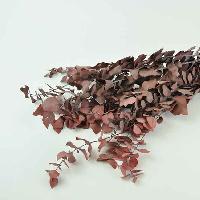 Eucalyptus Stuartiana Red