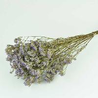 Limonium Purple