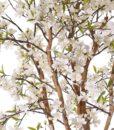 862_APPLE_TREE_UV_WEB_02